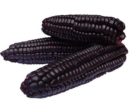 biologische paarse mais poeder