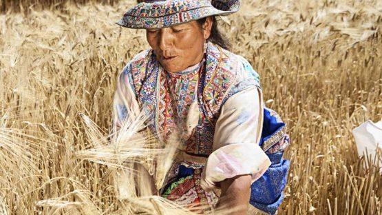 nutriboost groothandel voeding