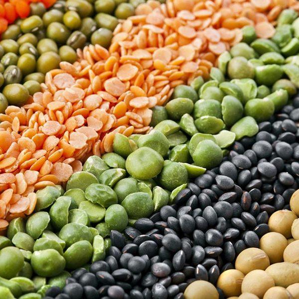 groothandel in bonen en peulvruchten nutriboost