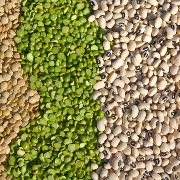biologische groothandel in bonen en peulvruchten nutriboost