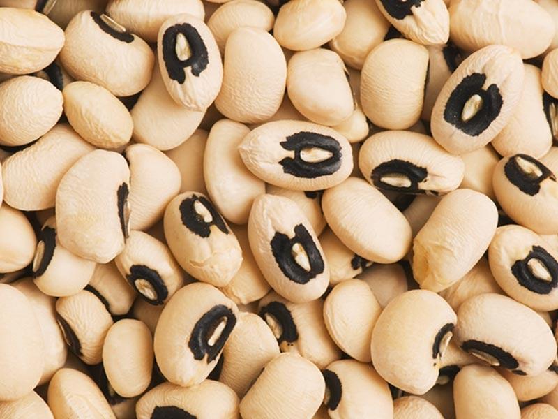 bonen en peulvruchten groothandel nutriboost