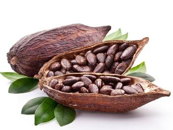 Biologische Cacao Bonen